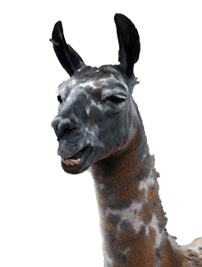 Sy Q. Llama